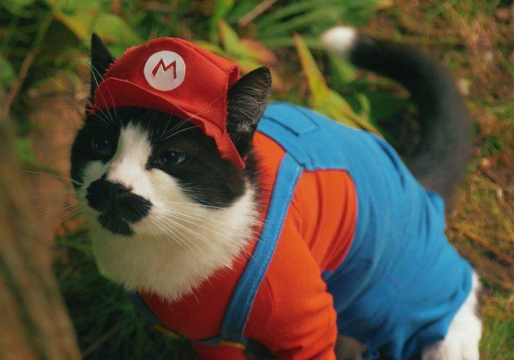 Un gatito interpreta a Mario Bros en un cortometraje