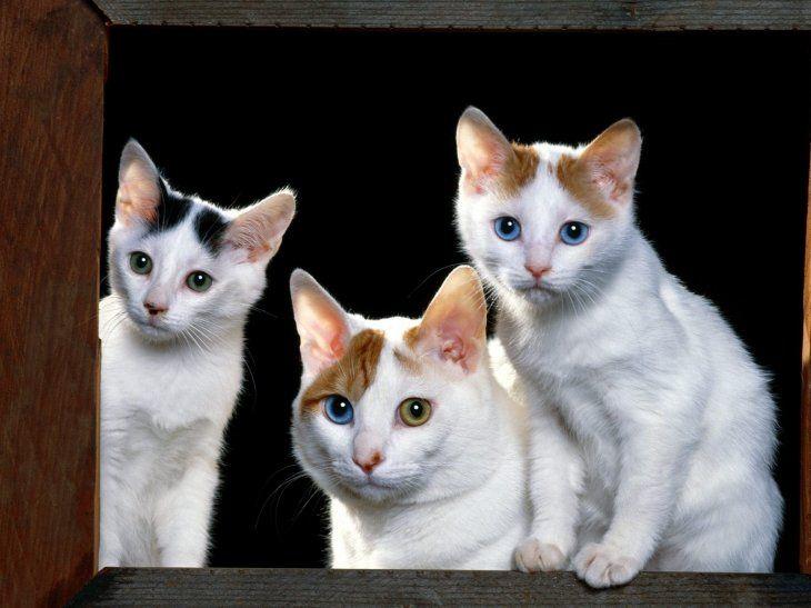Se busca cuidador de gatos