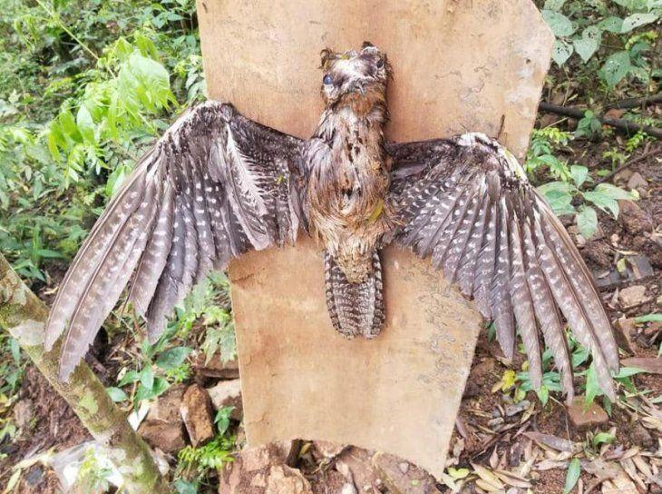 Así lo encontraron en el Área 1 de la capital del Alto Paraná.