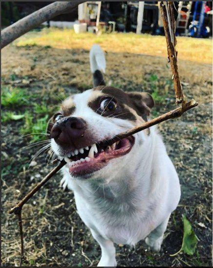 Perrito famoso por no aceptar cariño