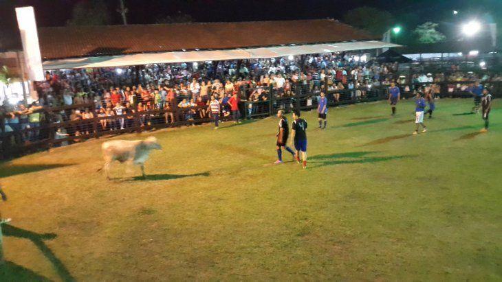 Futbol boi atrapa en la Expo Norte