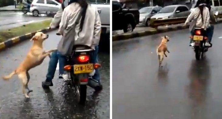 Desesperante. El perrito siguió a sus dueños hasta donde pudo.