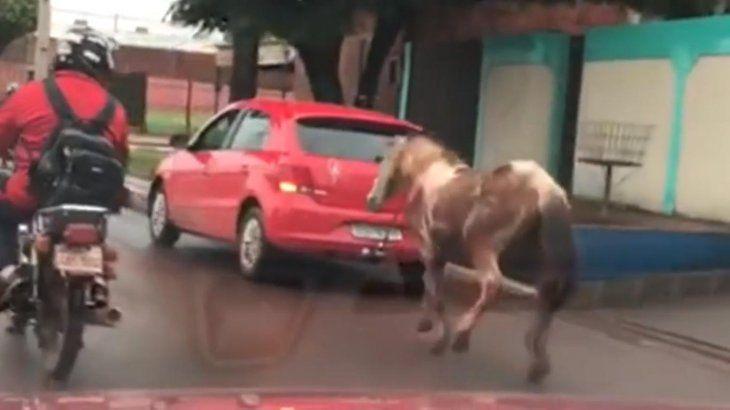 Coche arrastró a caballo y generó repudio en las redes sociales