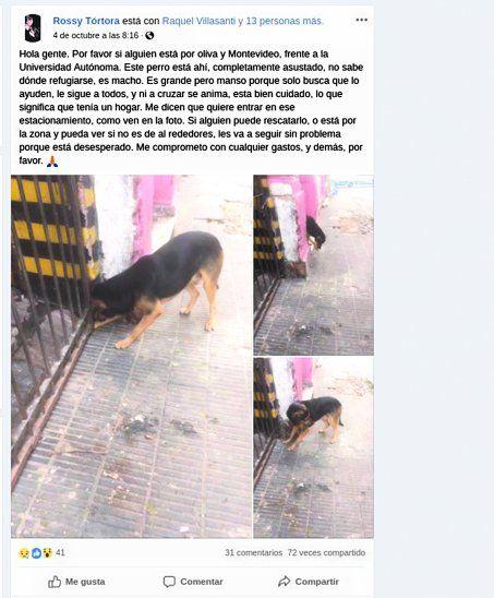 En la mañana de ayer se hizo viral el perro de Julio