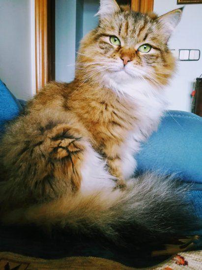 Conmovedora historia de una nena que iba en el micro y encuentra su gato perdido
