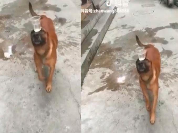 Mirá, si tu perro no hace esto, no sé cómo decirte...
