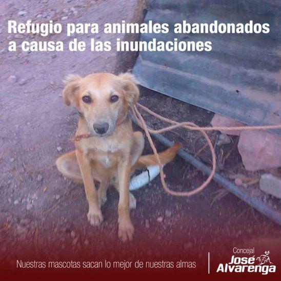 Habilitarán refugio para animales afectados por la crecida