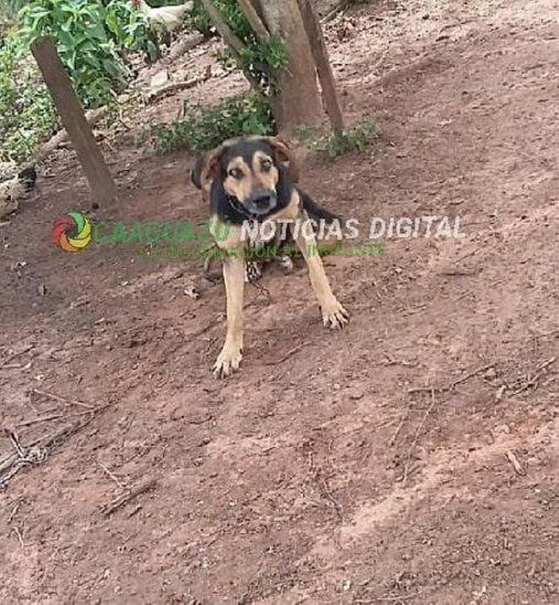 Mató al dueño del perro que mordió a su hija