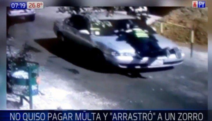 El automovilista no ponderó por el zorro y lo embistió. El hombre no fue identificado.