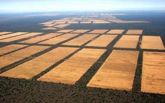 Deforestación del Chaco Paraguayo.