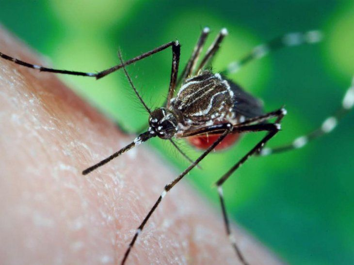 El sudor atrae a los mosquitos