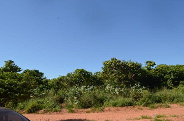 El terreno de 5 hectárea está con muchas malezas.