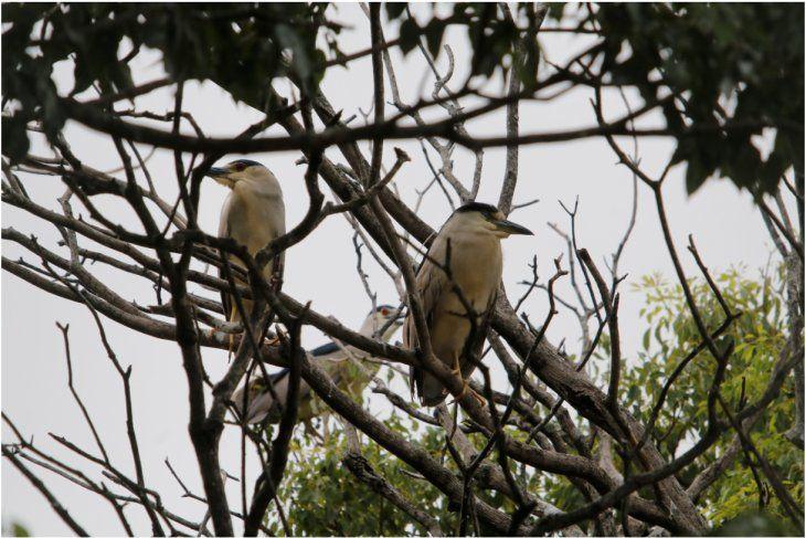Las aves posando en un árbol.