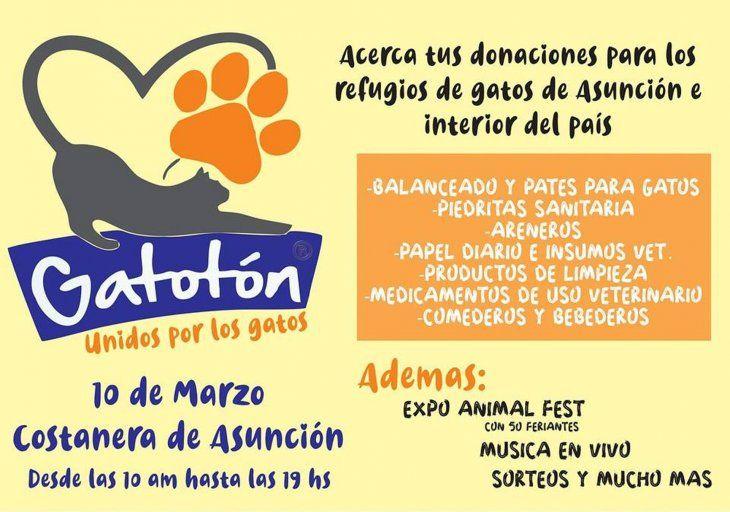 Los michis de parabienes: se viene el gatotón este domingo en la Costanera