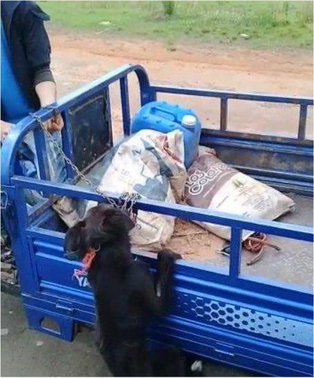 El pobre animal estaba a punto de morir ahorcado cuando Damián intervino.