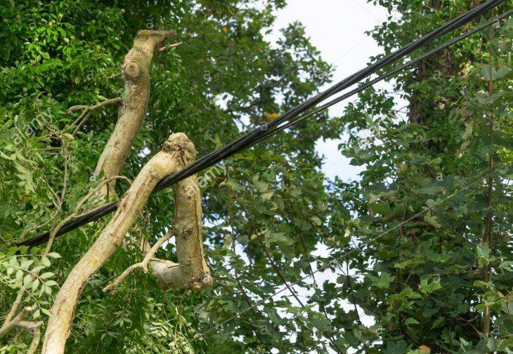 La rama entró en contacto con un tendido eléctrico.