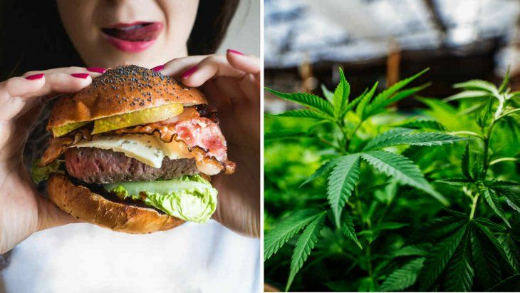 En EE.UU lanzaron una hamburguesa con infusión de marihuana