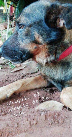 Baleó casa de su vecina para matar a sus perros