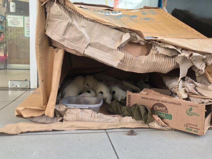 Harán colecta para refugio de animales rescatados de la crecida