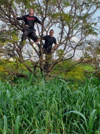 Subieron a un árbol para ver dónde estaba escondido el delincuente.