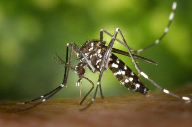 Un niño de 11 años falleció por dengue en Caazapá