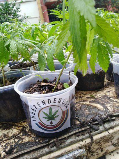 Se aprenderá a cultivar la planta