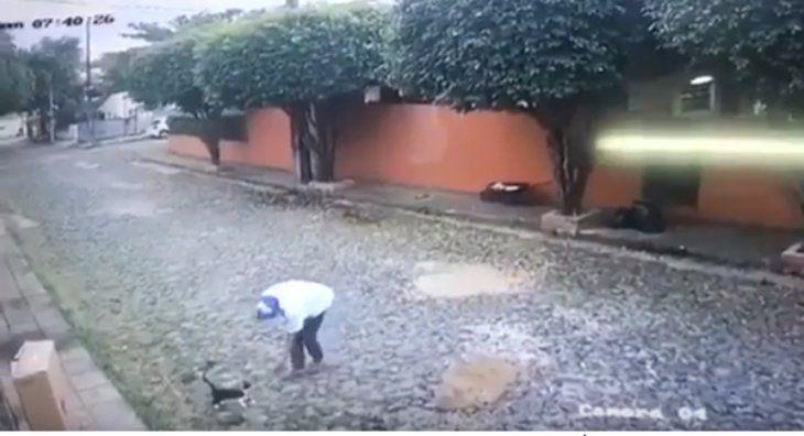 Le rompió la pata a un gatito y lo acusan de zoofilia