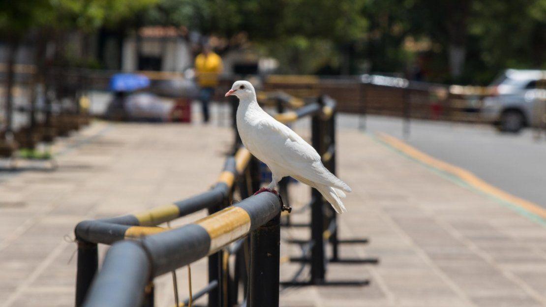 Una paloma se posa sobre la valla de seguridad.