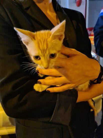 Hallaron un solo gato en la intervención. Animaleros piden cuidarse mucho a la hora de dar a los peluditos en adopción.