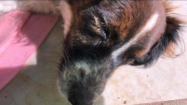 Tomás tiene una infección en el ojo. Los veterinarios buscan la causa